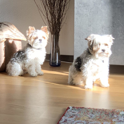 Julia Wester's dogs
